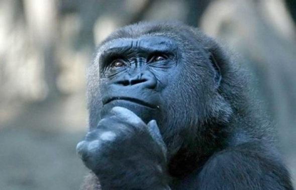 thoughtful-monkey